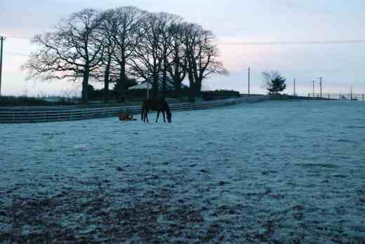 horses out - the one on its back is just having a breakfast roll - it isnt dead - i hope