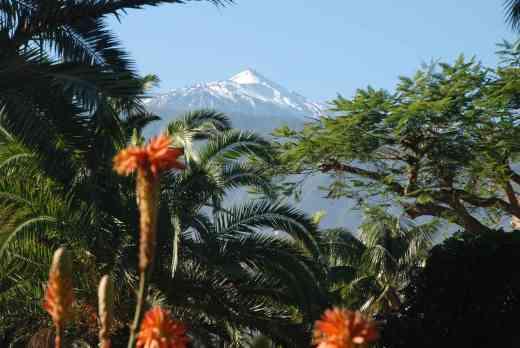 Mount Teide from Puerto de la Cruz