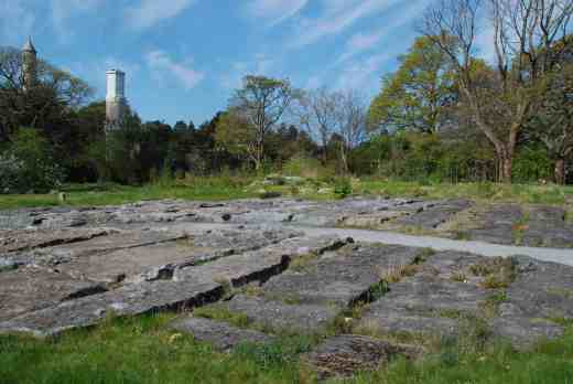 This is a botanic garden so must feature Ireland's native flora including an area that represents the famous Burren in the west (and which I must get to too)