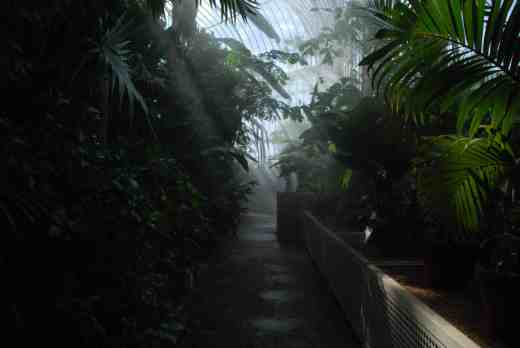 Inside the Palm House with the mist on