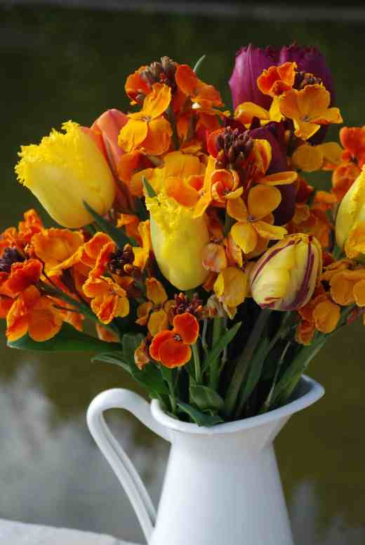 Wallflowers make lovely, if short-lived, cut flowers, especially with tulips. Jug from Ikea (8.25 euro)