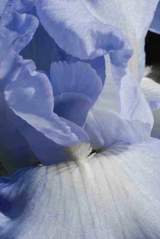 iris joyful skies4