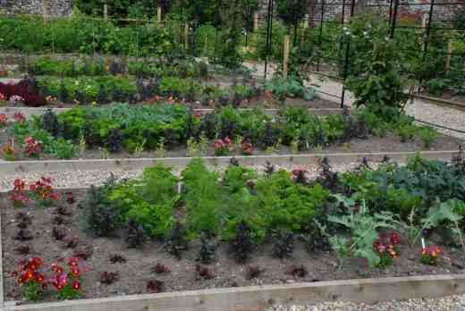 veg beds june
