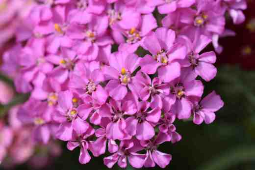 The pretty flowers merit close inspection