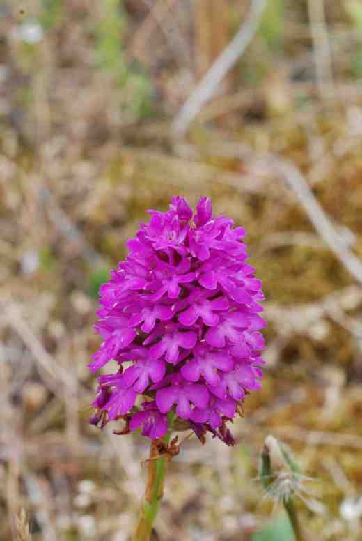 They are scattered around the dunes and in surrounding grassland