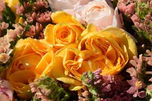 rose ab fab bunch