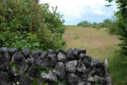 Stone walls and wild flowers in The Burren