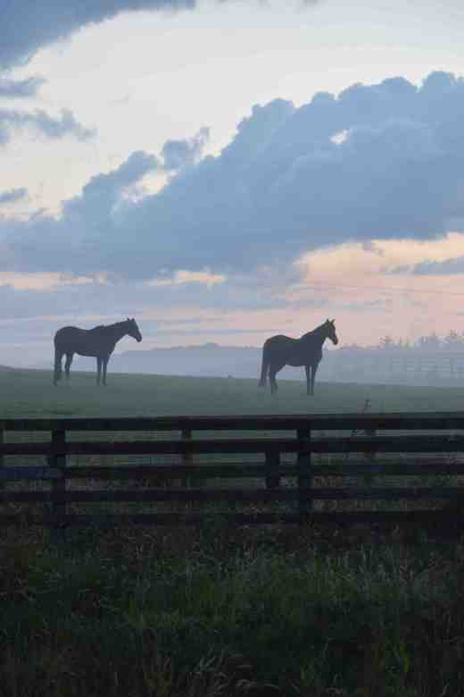 horses in mist aug 9 3