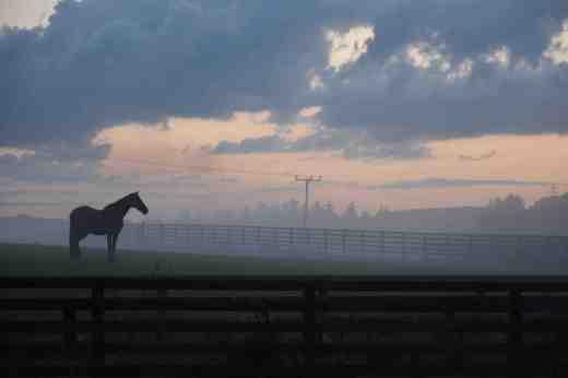 horses in mist aug 9 5