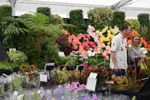 The Grand Marquee was packed with exhibits including ivies, begonias and pelargoniums from Fibrex...