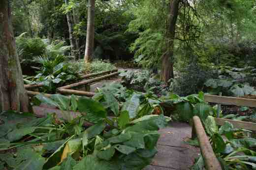 The spring garden is a maze of paths and the boardwalk and huge skunk cabbage leaves made exploring it quite exciting