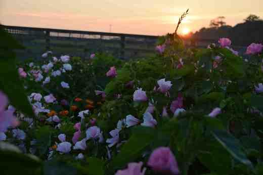 naturalised sunset2