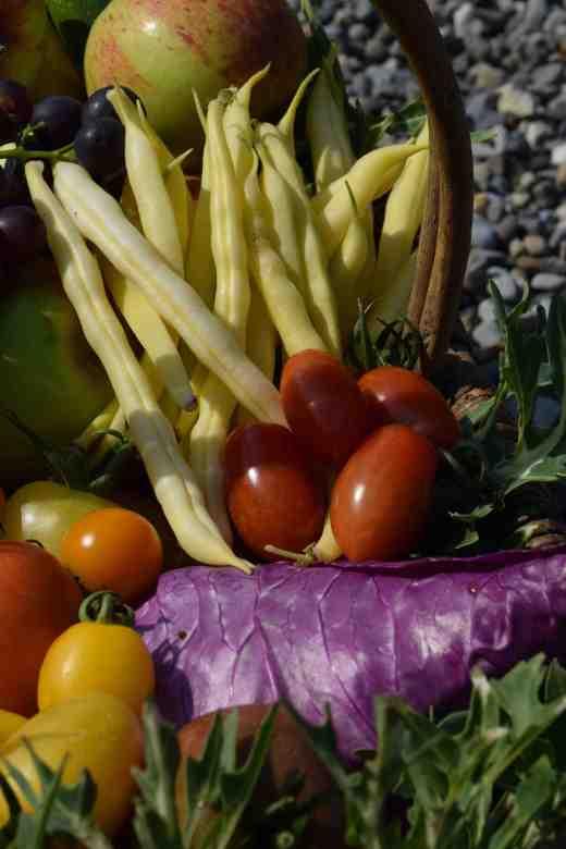 veg basket2