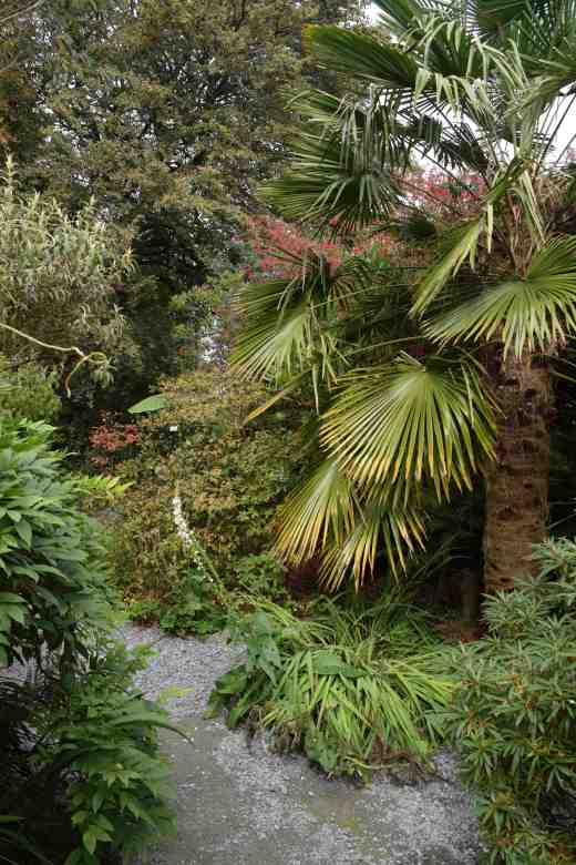 Bamboos, trachycarpus and ground cover give you a 'tropical fix' as you leave the main, formal garden