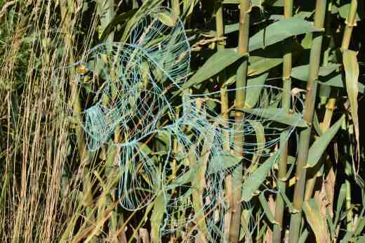 'Waltzing Goldfish' by Susan Cuffe'. This delicate, hanging piece was enhanced by the colour of the grasses