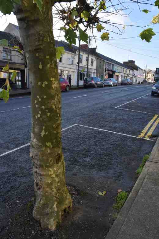 In Ireland a street tree is what it says - planted in the street! I am amazed at the number of trees actually planted in the road - sounds dangerous but I suppose it is safer for pedestrians!