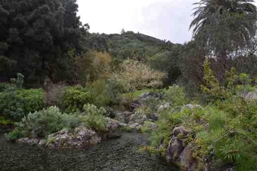botanic gdn gran canaria12