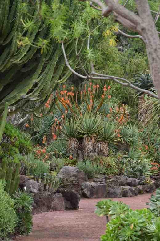 botanic gdn gran canaria4