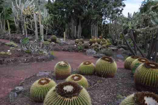 botanic gdn gran canaria8