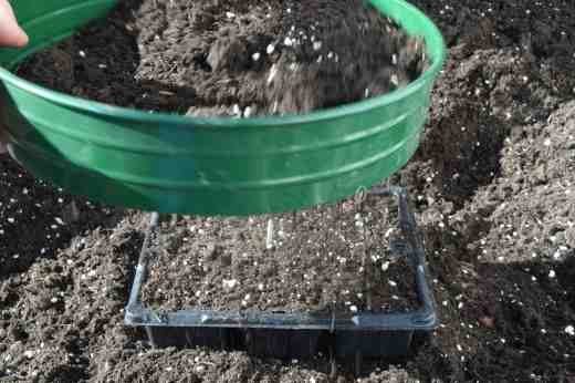 Once the seed trays are filled with compost I give them a tap on the bench to settle the compost and sieve a little compost over that if i am sowing fine seeds