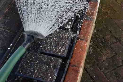 Water the trays before sowing. Ideally soak the trays or, if you are in a hurry, water them from above.