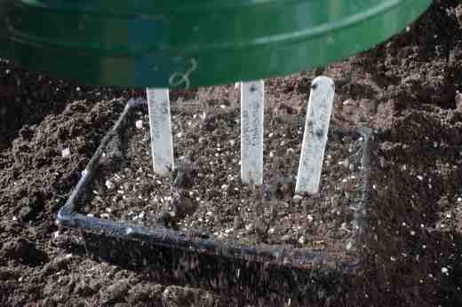 I cover most seeds with a layer of perlite so it keeps some moisture around the seeds but lets light in - some seeds need light to germinate. But sometimes sieved compost will do for large and easy seeds. Make sure you label them. I make a note of when seeds were sown so I can see how long they take to germinate. Germination times vary from a few days to a month or more.