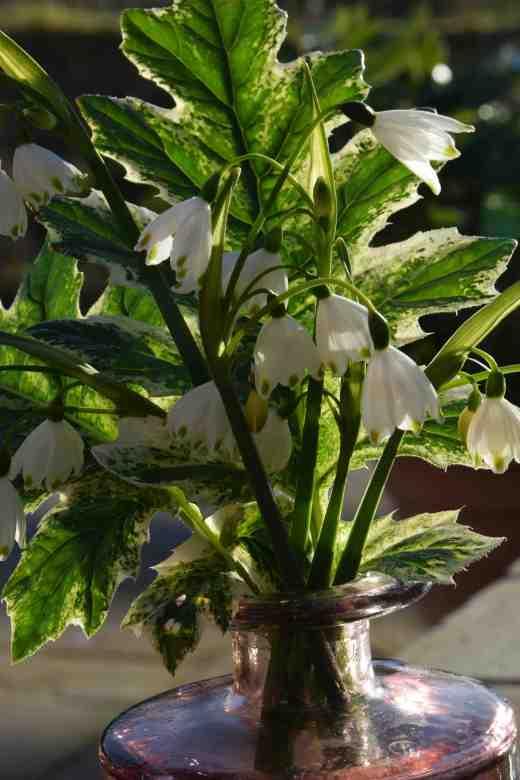 acanthus white 3