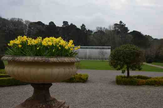 And there were more! Planted in the parterre in the walled garden
