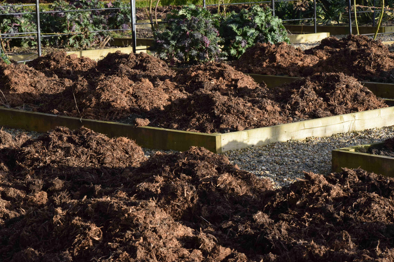 Feed the soil not the plant   The Biking Gardener