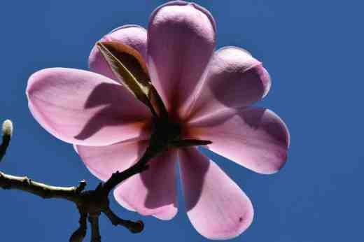 Under a big magnolia