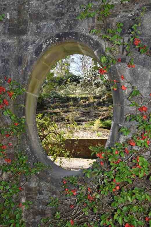 And a view of the rest of the garden through a window lined with neatly trained chaenomeles