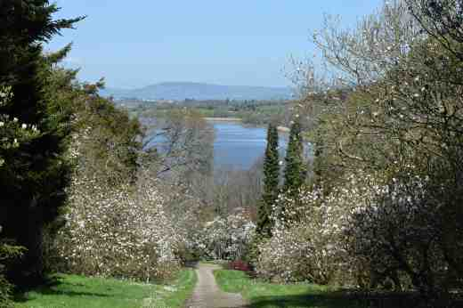 At the far end of the garden is a sloping walk, lined with what must be a hundred what look like Magnolia soulangeana cvs with a view over the River Suir
