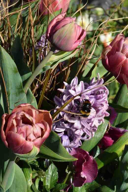tulip la belle epoque3
