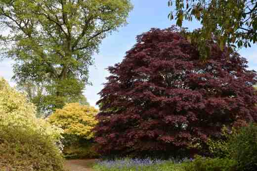 How many plants do you need to have a lovely garden? I think I would be happy to have just this one Japanese maple!