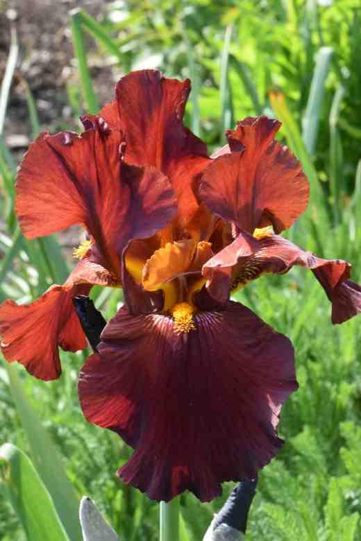 iris gallant moment 2
