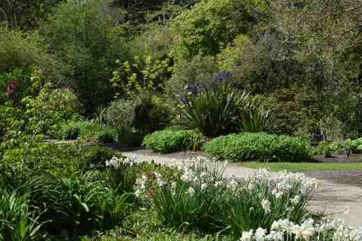 The extensive woodland garden area is packed with interest