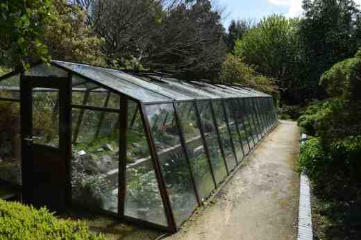 This greenhouse has a sunken path and is planted with Mediterranean plants and others that are hardy but need protection from wet