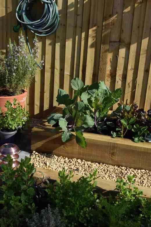 Part of the Edible Garden