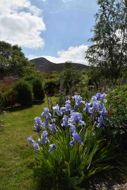 The top of the garden gives a view of the Sugar Loaf - just like big neighbour Powerscourt!