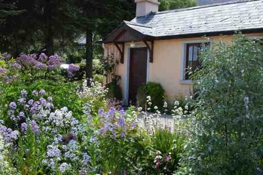 Sweet hesperis frames the cottage