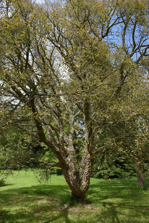 Put a cork in it: quercus suber the biking gardener