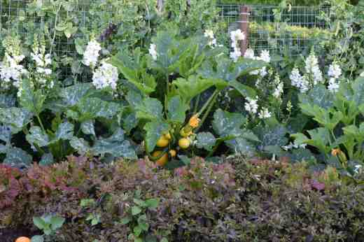 courgettes 15