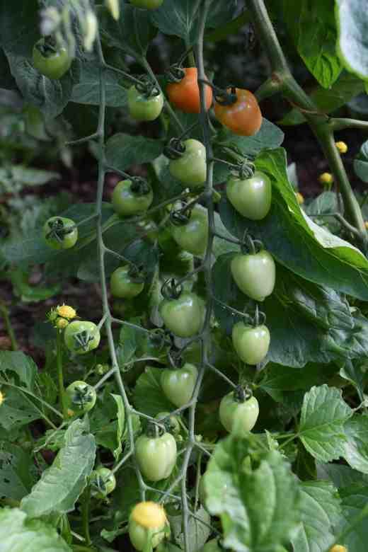 tom gardenberry