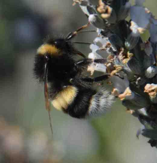 bubblebee2