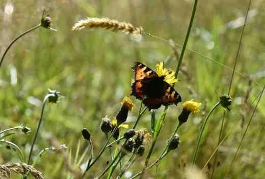 butterfly wild4