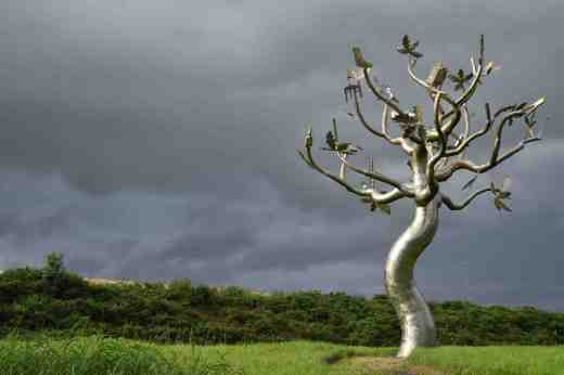 clonroche tree