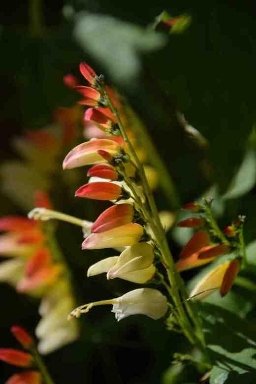 mina flowers