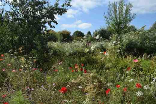 lismore castle wild flowers2