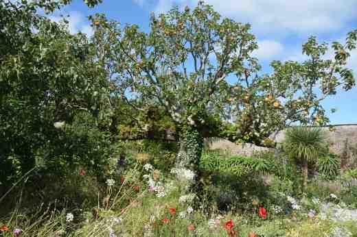 lismore castle wild flowers3