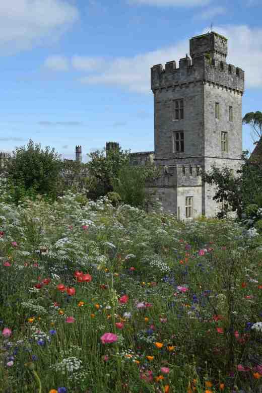 lismore castle wild flowers4